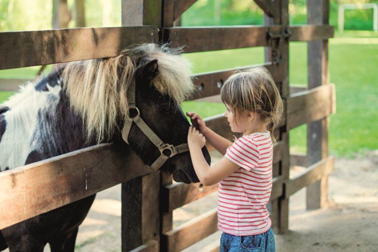 Kindergeburtstag Pferde